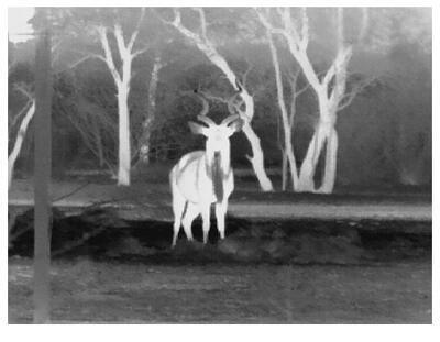 Termokamera FLIR BHS-X Command na nočné videnie - 4