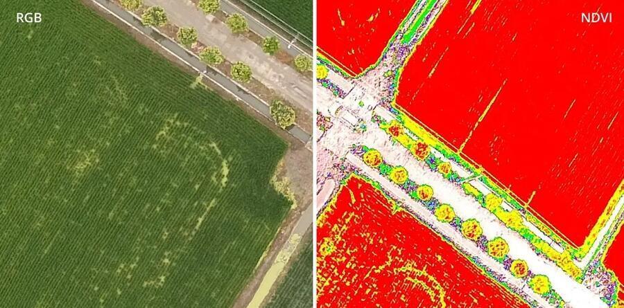 srovnani rgs vs ndvi snimek z multispektralni kamery pro precizni zemedelstvi